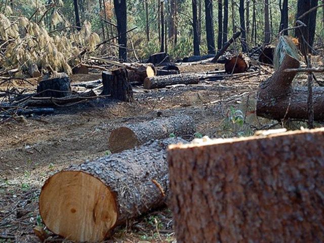 Tala clandestina y cambio ilegal de uso de suelo, principales problemáticas de comunidades de Zitácuaro