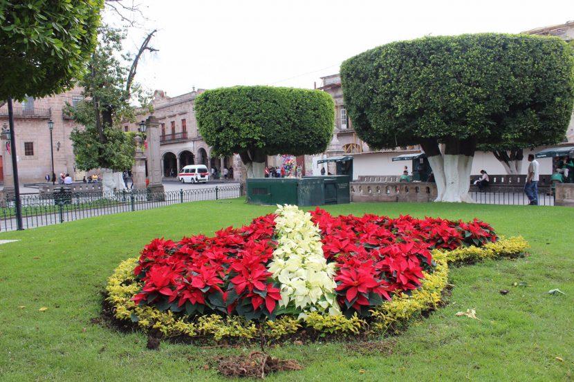 Embellecen plazas y jardines de Morelia con flores de Nochebuena