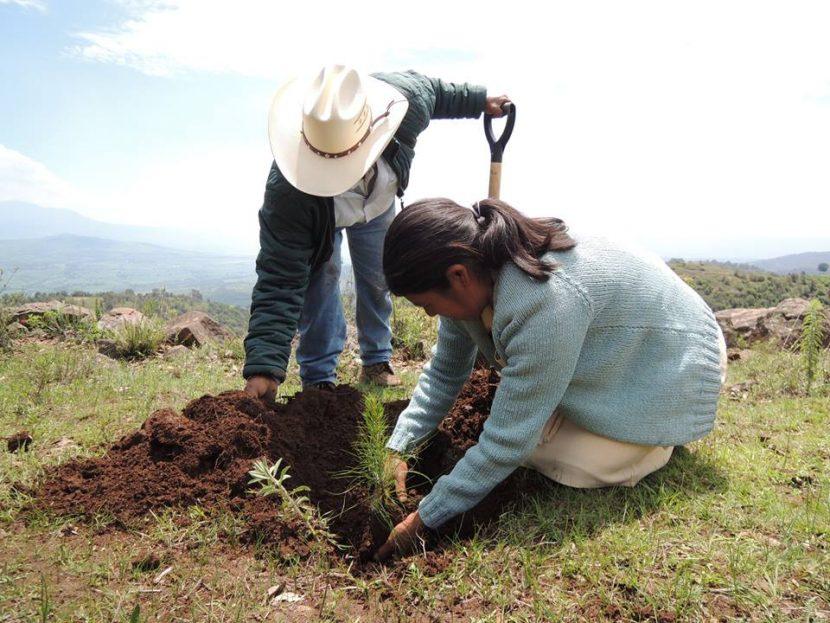 Aprueban diputados implementar y aumentar campañas de reforestación en zonas afectadas por incendios