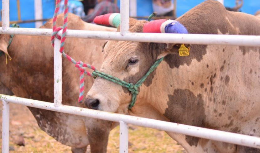 Será obligatorio en Michoacán el registro de movilización del ganado