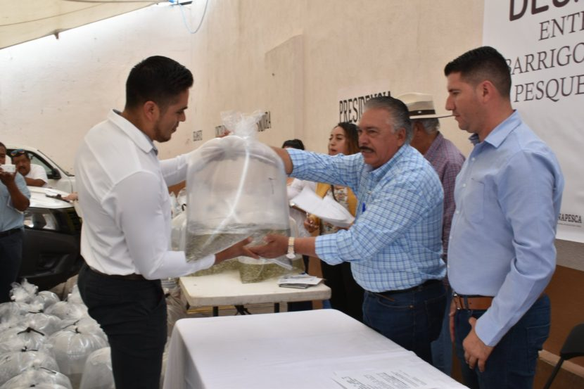 Gobierno de Maravatío entrega las primeras 70 mil crías de carpas a productores