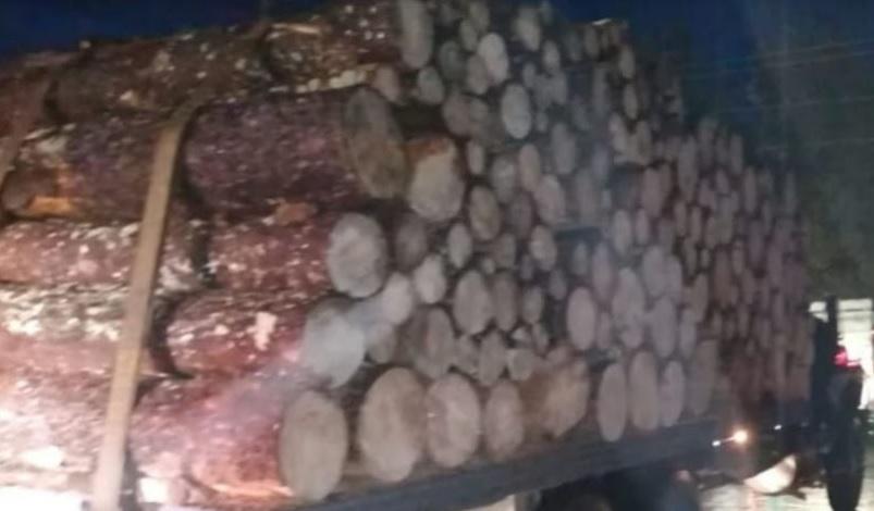 Asegura SSP 200 rollos de madera ilegal, en Senguio