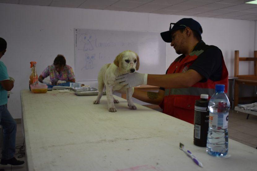 Termina primer campaña de esterilización gratuita en Maravatío
