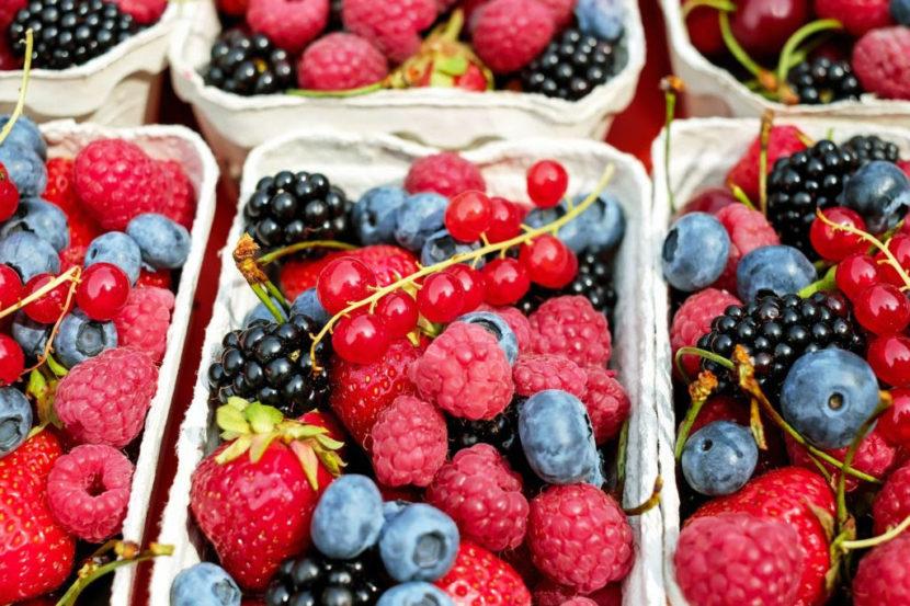 Michoacán, líder indiscutible y cuna mundial en producción de berries