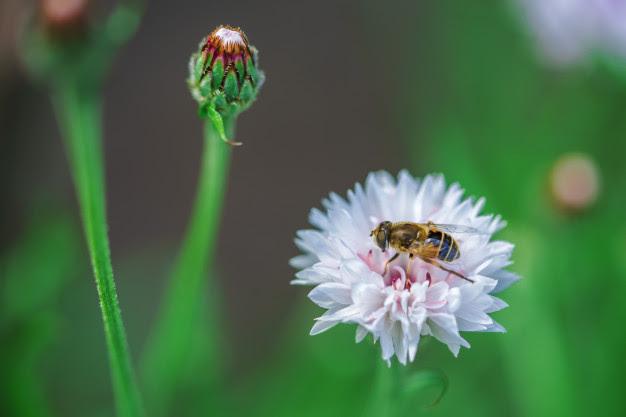 Michoacán, hogar de 11 especies distintas de abejas.