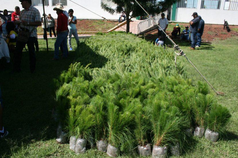 Más de 22 mil árboles repartidos en Maravatío para reforestar.