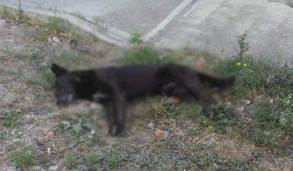 Ante reciente envenenamiento de perritos, Ayuntamiento de Maravatío se deslinda
