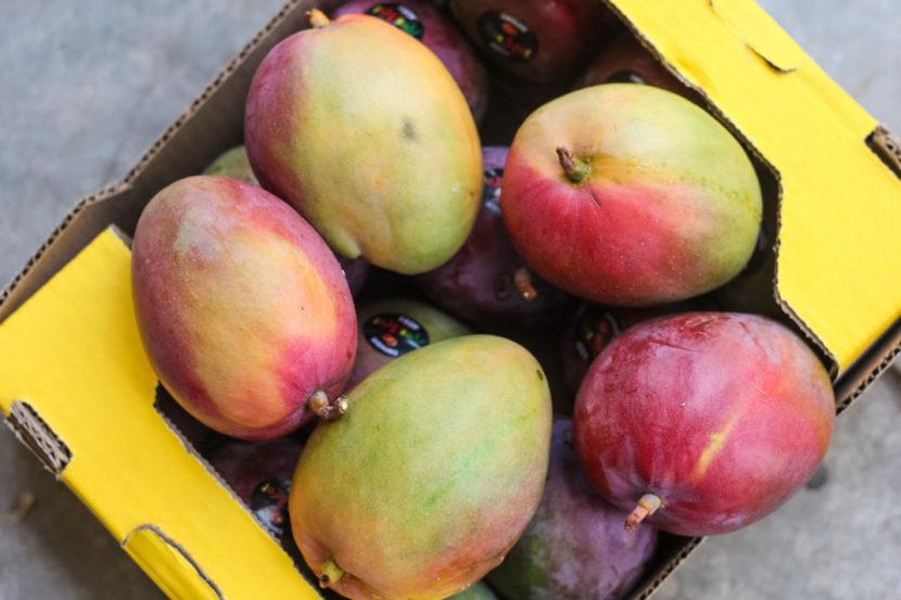 Logra Michoacán alto rendimiento en producción de mango