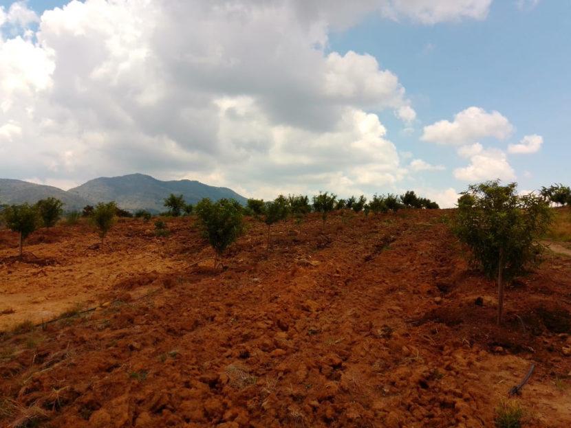Durazno y maíz de Jeráhuaro, al Programa de Agricultura Sustentable