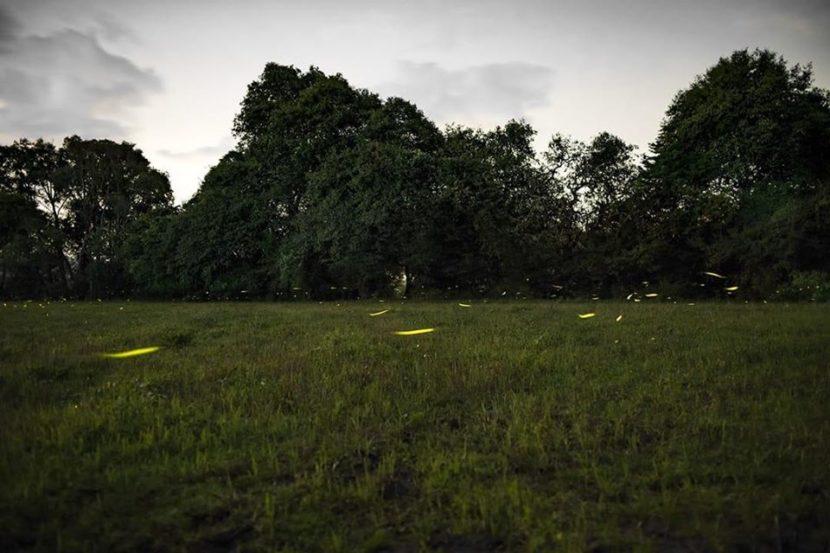 Buscan certificar zona de avistamiento de luciérnagas de Tlalpujahua como área de conservación