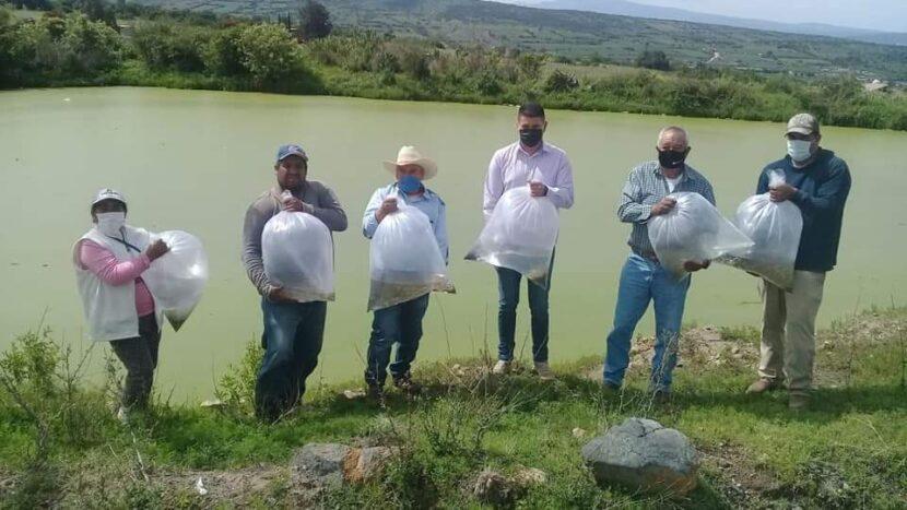 Ayuntamiento de Maravatío entrega crías de peces a habitantes de Uripitio