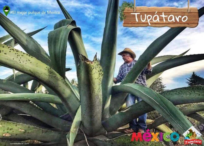 """La comunidad de Tupátaro te invita a """"Pulquear"""" este próximo martes 5 de enero"""
